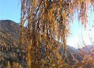 Il foliage nei boschi del Tesino - Cammina Tesino Autunno