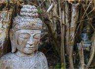 Primavera del Budo nel Tesino