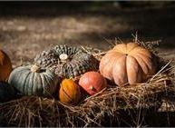 Festa della zucca e Festa d'autunno