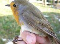 Cammina Tesino Autunno - Alla scoperta degli uccelli migratori
