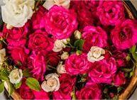 Festival dei fiori