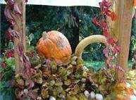 Festival della Zucca