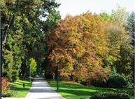 Vivere il parco | Visita botanica al parco delle Terme