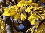 Cammina Tesino Autunno - Passeggiata foliage