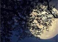Passeggiata sotto la luna