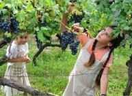 Festival dell'Uva